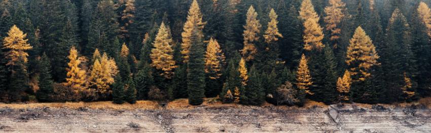 Placement alternatif : investir dans la forêt.